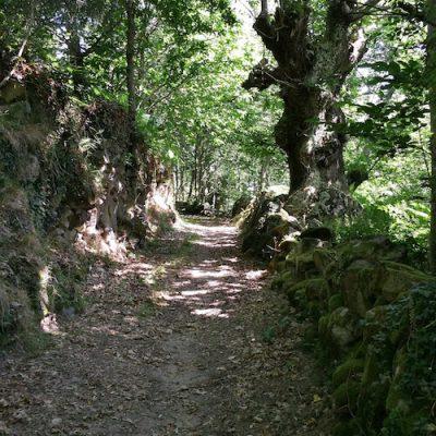 Ribeira Sacra - Ourense9