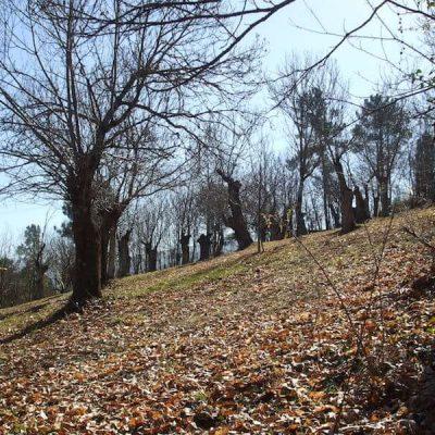 Ourense Mountain5